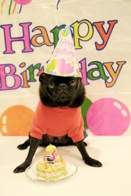 お誕生日のお祝いです