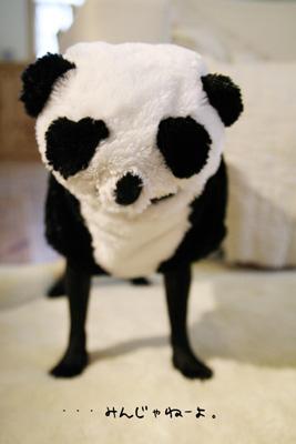やさぐれパンダ?