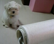 興味を示す犬