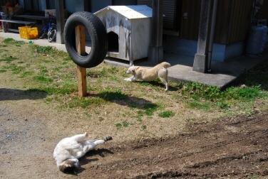 犬も猫も大喜び