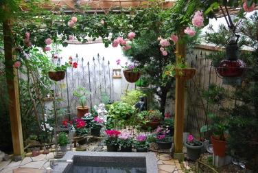 露天風呂のバラ