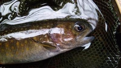 100306岩魚(顔)