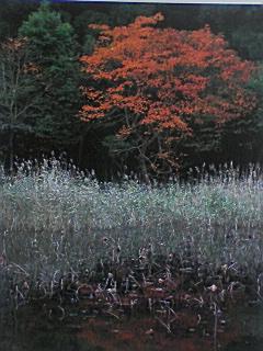 雄蛇ケ池の紅葉