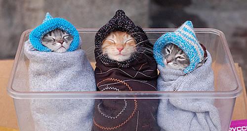 ネコ3匹洗濯ロープ
