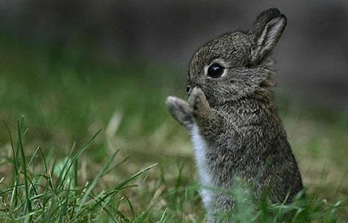 赤ちゃんウサギ立ち姿