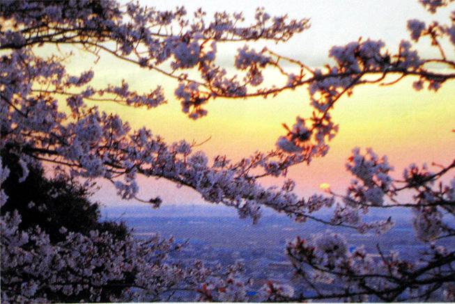 桜まつり山王台