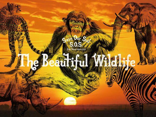 The_Beautiful_Wildlife[1].jpg