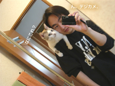 猫 肩乗りバージョン