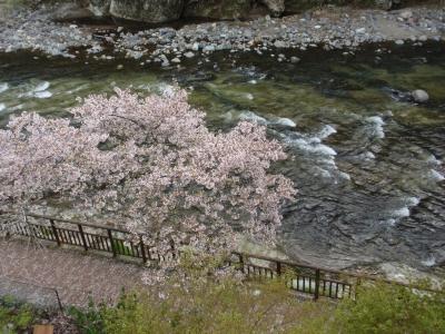 桜咲く箒川辺
