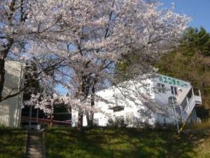 エコラボリーの桜