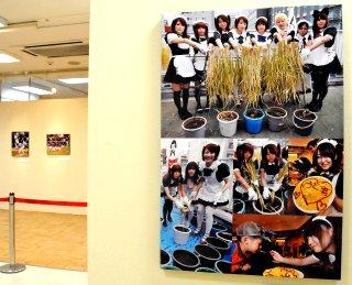 写真:日本農業新聞提供