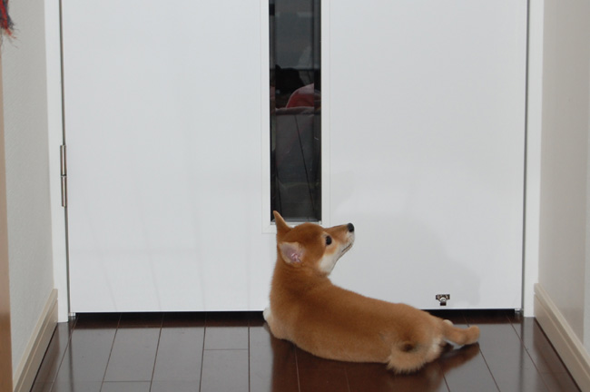 20080509_door