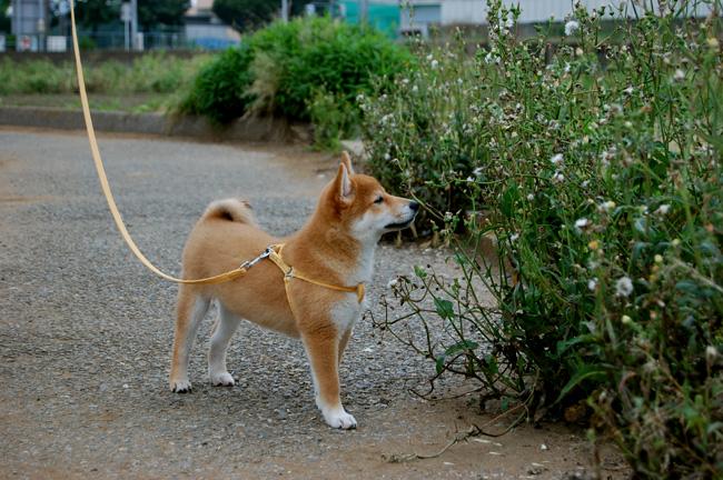 20080608_散歩