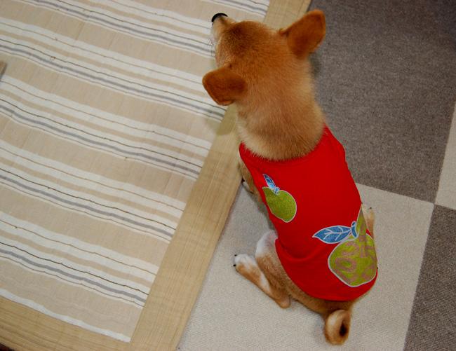 20080712_洋服