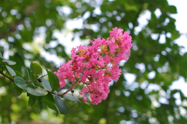 20090813_flower