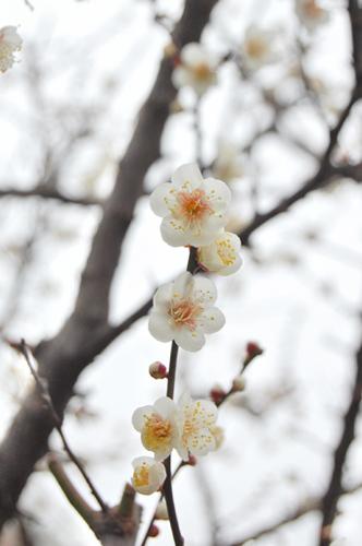 20100211_flower01