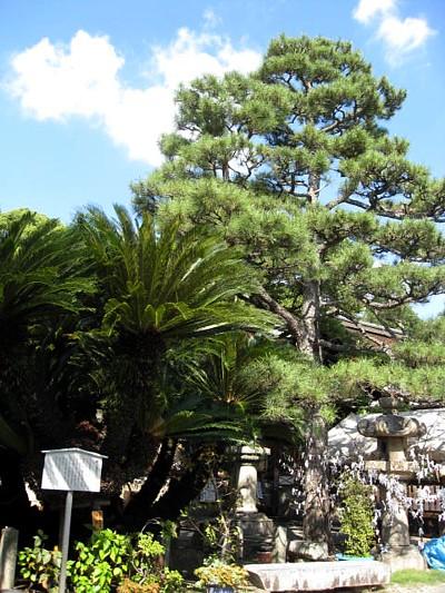 御香宮神社13