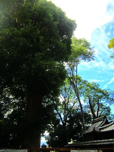 御香宮神社のお祭り21