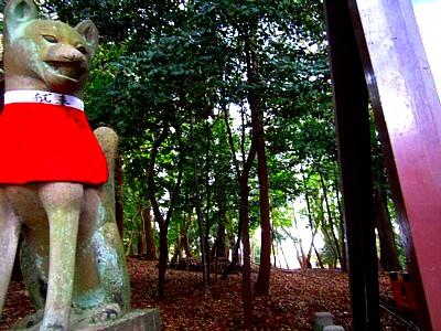 京都伏見稲荷神社24
