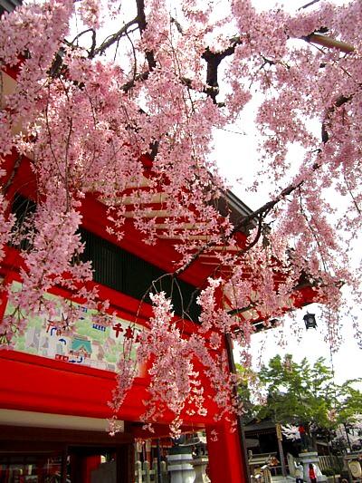京都伏見稲荷神社30