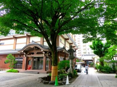 夏の本能寺2