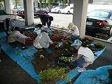 町内花の植え替え