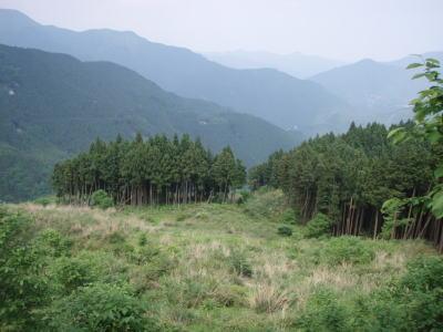 開けた伐採地