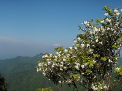 シロヤシオと富士山
