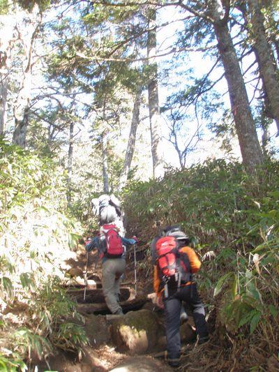 樹林帯を登り