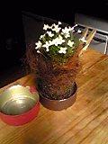 亀甲編みの篭で植物を♪