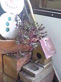 煉瓦の上で ひなたぼっこ♪