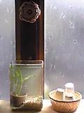 ガラス瓶でビオトープ