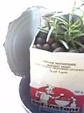根が出たローズマリーを植え込んで♪.JPG