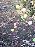 柳の枝に繭玉をつけます。カラフルで可愛く♪