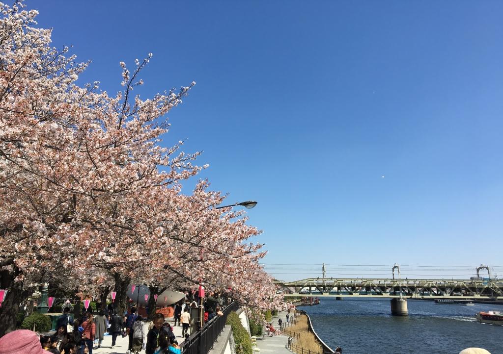 隅田川お花見クルーズ1