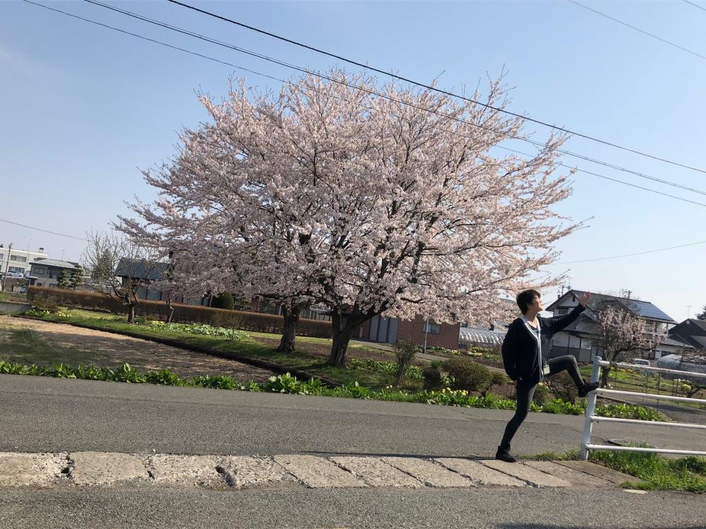 シャンプー店近隣の立派な桜