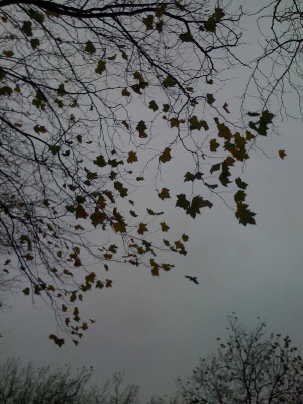 仕入れ旅枯れ葉