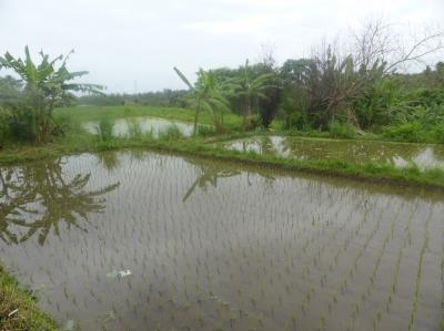 インドネシア�