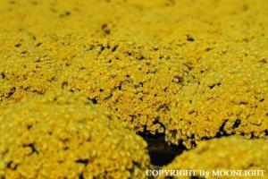あかぼり小菊の里