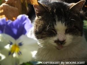 マリアブルーオーシャン&とっちゃん猫