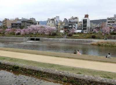 京都の桜 2017 鴨川