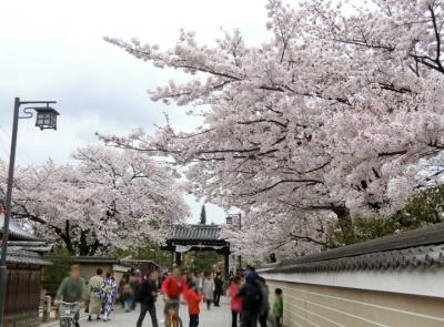 京都の桜 2017 祇園