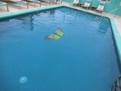 ハワイ「アクア パシフィック モナーク Aqua Pacific Monarch」プール バタフライ蝶