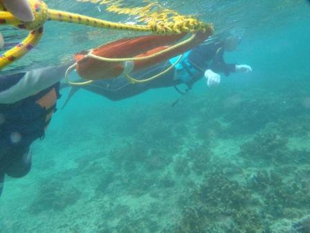 沖縄の海を独り占め!シュノーケリングツアー