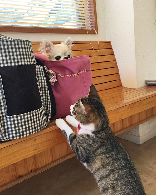 cats.jpg