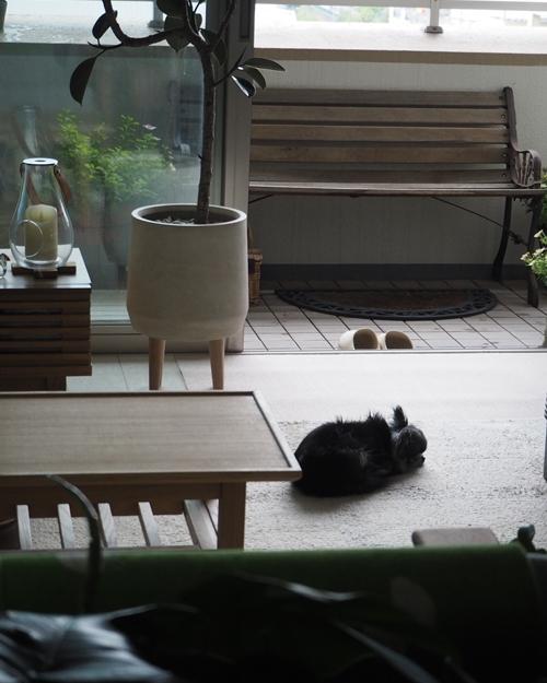 cats99.jpg