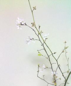3/17日記