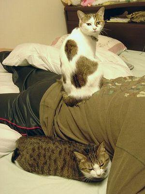 オレさまな猫。(てか女王さま〜)