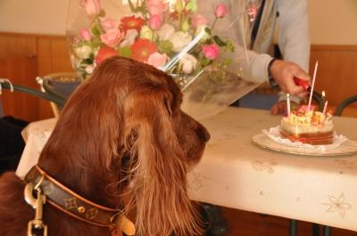 ミシェのお誕生会