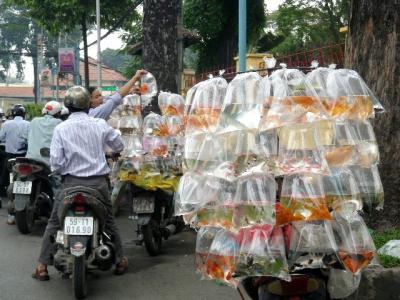 ベトナムの金魚